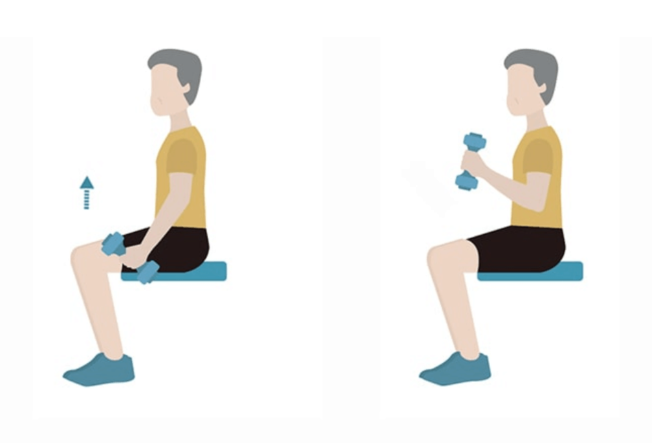 seated bicep curls exercises